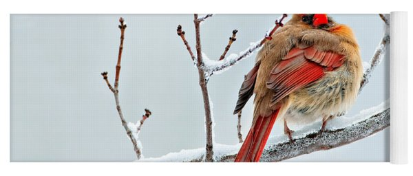 Cardinal I The Snow  Yoga Mat