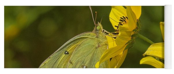 Clouded Sulphur Butterfly Din099 Yoga Mat