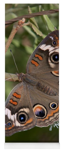 Common Buckeye Butterfly Din182 Yoga Mat