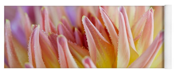 Dahlia Flower 05 Yoga Mat