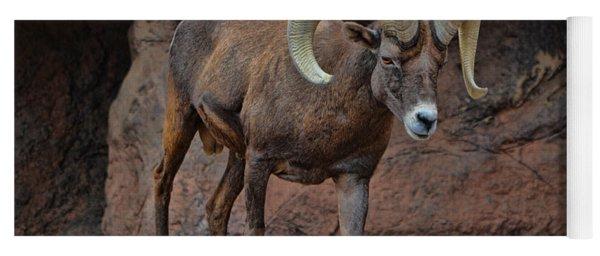 Desert Bighorn Sheep Ram I Yoga Mat