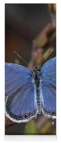 Eastern Tailed Blue Butterfly Yoga Mat