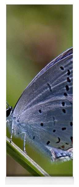Eastern Tailed-blue Butterfly Din045 Yoga Mat