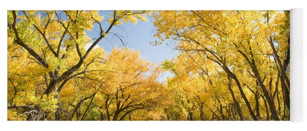 Fall Leaves In New Mexico Yoga Mat