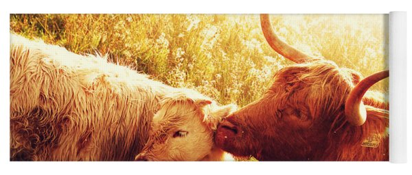 Fenella With Her Daughter. Highland Cows. Scotland Yoga Mat