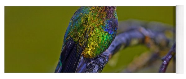 Fiery-throated Hummingbird Yoga Mat