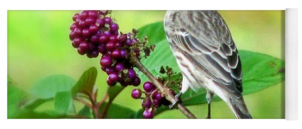 Finch Eating Beautyberry Yoga Mat