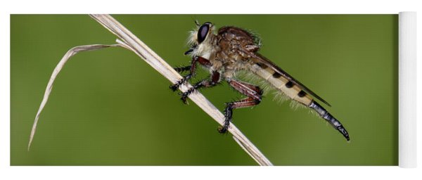 Giant Robber Fly - Promachus Hinei Yoga Mat