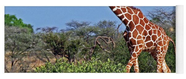 Giraffe Against Blue Sky Yoga Mat