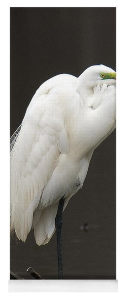 Great Egret Resting Dmsb0036 Yoga Mat