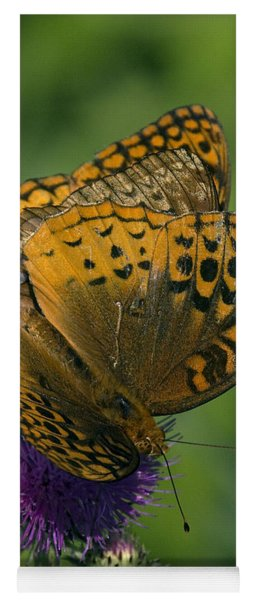 Great Spangled Fritillaries On Thistle Din108 Yoga Mat