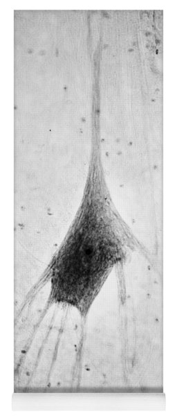 Human Neuron Yoga Mat