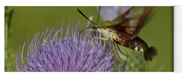 Hummingbird Or Clearwing Moth Din178 Yoga Mat