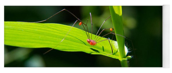 Yoga Mat featuring the photograph Itsy Bitsy Spider by Frank Pietlock