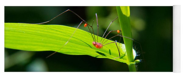 Itsy Bitsy Spider Yoga Mat