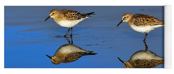 Juvenile White-rumped Sandpipers Yoga Mat