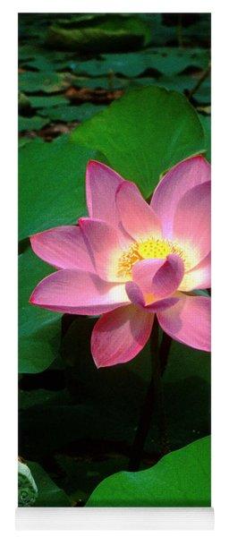 Lotus Flower And Capsule 24a Yoga Mat