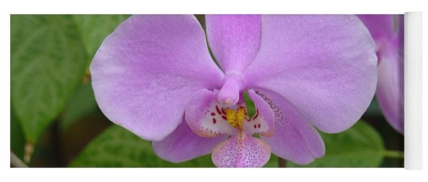Pale Pink Orchid Yoga Mat