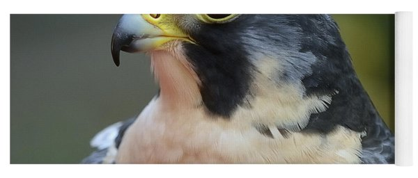 Peregrine Falcon Yoga Mat