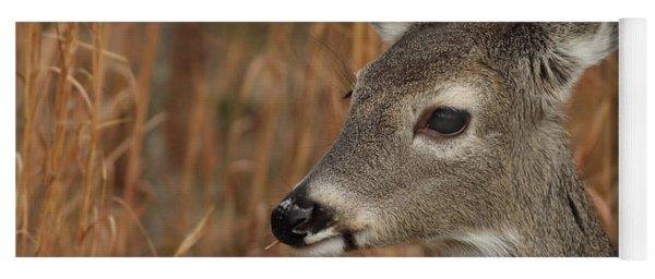 Portrait Of  Browsing Deer Yoga Mat