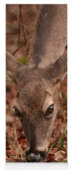 Portrait Of  Browsing Deer Two Yoga Mat
