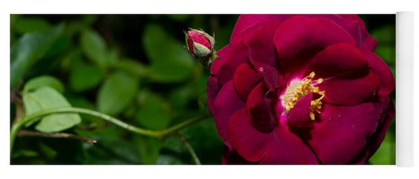 Red Rose In The Wild Yoga Mat
