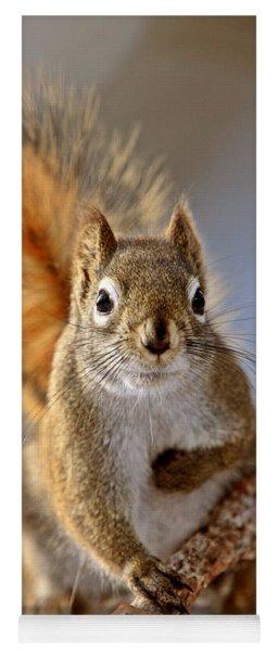 Red Squirrel In Winter Canada Yoga Mat