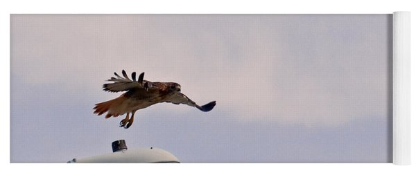 Red-tailed Hawk In Flight Yoga Mat