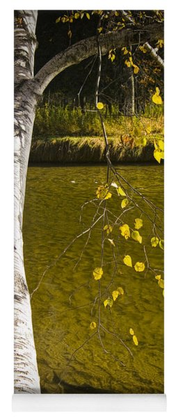 Salmon During The Fall Migration In The Little Manistee River In Michigan No. 0887 Yoga Mat