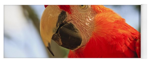 Scarlet Macaw Parrot Yoga Mat