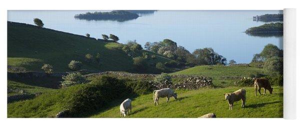 Sheep Grazing By Lough Corrib Cong Yoga Mat