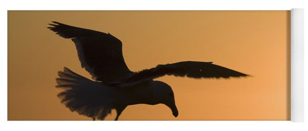 Silhouette Of A Seagull In Flight At Yoga Mat