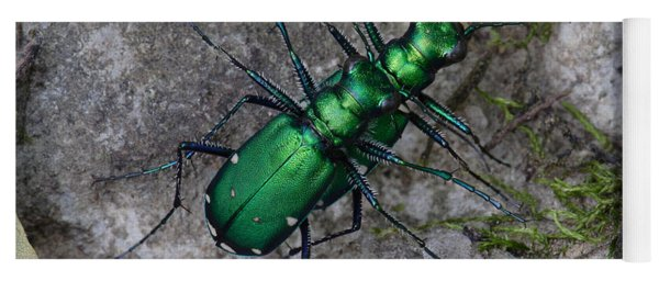 Six-spotted Tiger Beetles Copulating Yoga Mat