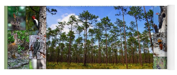 Southeastern Pine Forest Wildlife Poster Yoga Mat
