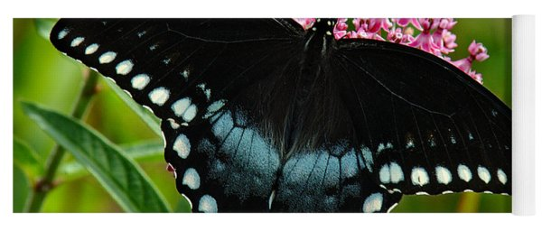 Spicebush Swallowtail Din038 Yoga Mat