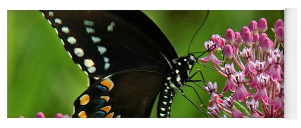 Spicebush Swallowtail Din039 Yoga Mat