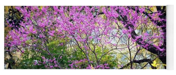 Spring Trees In San Antonio Yoga Mat