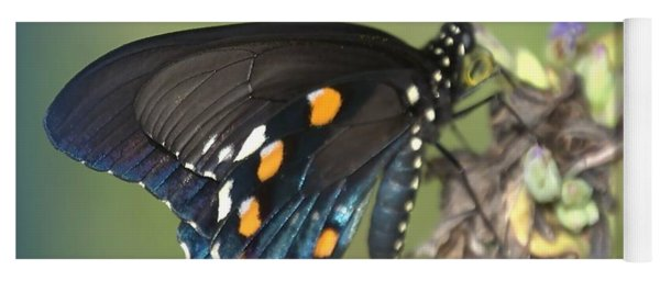 Yoga Mat featuring the photograph Swallowtail 1 by Judy Hall-Folde