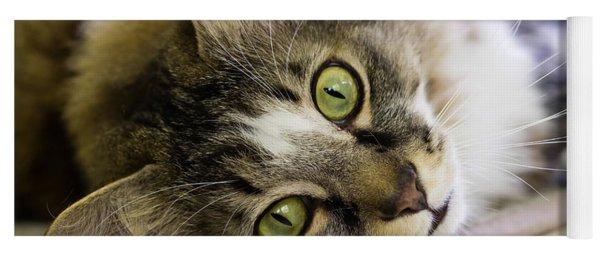 Tabby Cat Looking At Camera Yoga Mat