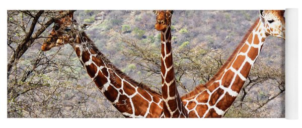 Three Headed Giraffe Yoga Mat