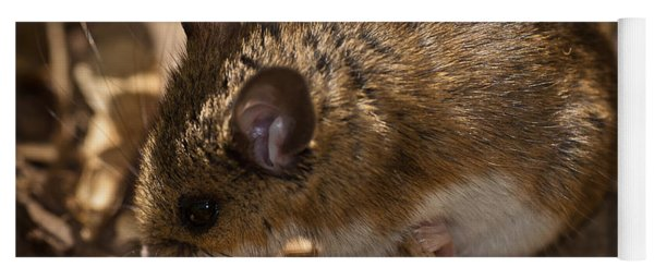 White-footed Mouse Yoga Mat