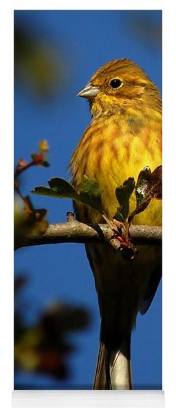 Yellowhammer Yoga Mat