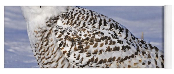 Young Snowy Owl Yoga Mat