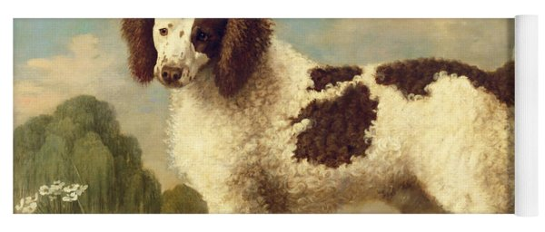 Brown And White Norfolk Or Water Spaniel Yoga Mat
