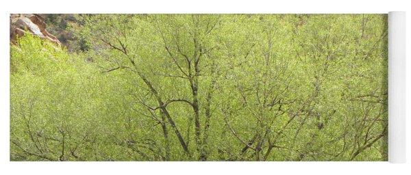 Tree Ute Pass Hwy 24 Cos Co Yoga Mat