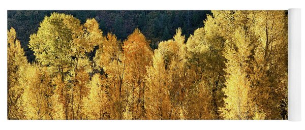 Aspens In Autumn II Yoga Mat