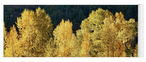 Aspens In Autumn IIi Yoga Mat