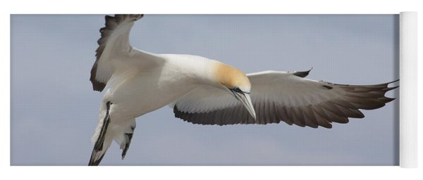 Australasian Gannet In Flight Yoga Mat