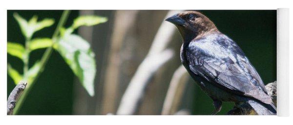 Brown-headed Cowbird Yoga Mat