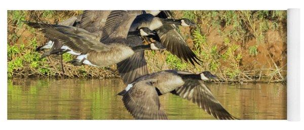 Canada Geese 100317-6526-2 Yoga Mat